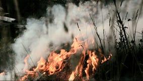 Fuego Hierba ardiente, madera, turba, bosque que la cámara se mueve almacen de metraje de vídeo