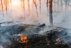 Fuego incendio fuera de control, bosque ardiente del pino en el humo y llamas imagen de archivo libre de regalías