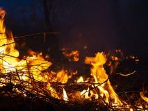 Fuego incendio fuera de control, bosque ardiente del pino en el humo y llamas foto de archivo