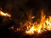 Fuego incendio fuera de control, bosque ardiente del pino en el humo y llamas fotos de archivo libres de regalías
