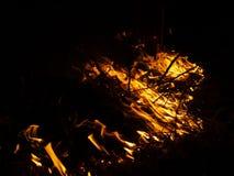 Fuego incendio fuera de control, bosque ardiente del pino en el humo y llamas imagen de archivo