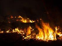 Fuego incendio fuera de control, bosque ardiente del pino en el humo y llamas fotos de archivo