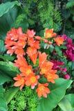 Fuego Lily Garden Foto de archivo libre de regalías