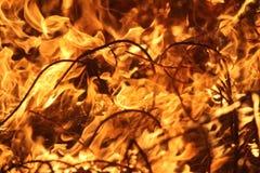 Fuego manejado de la pradera imágenes de archivo libres de regalías