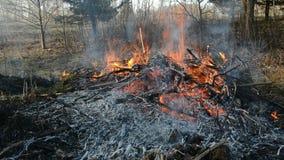 Fuego peligroso de la primavera cerca del bosque en hierba seca almacen de metraje de vídeo