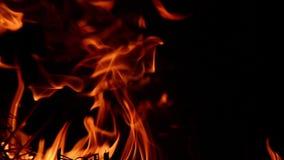 Fuego que quema en un bosque almacen de video
