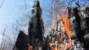Fuego Quemado abajo de árboles metrajes