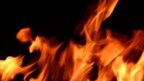 Fuego real en fondo negro almacen de video