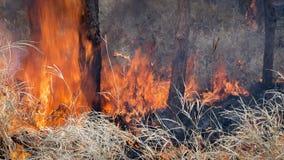 Fuego salvaje Foto de archivo