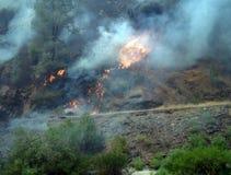 Fuego salvaje cerca del fuego de la hierba del parque nacional de Yosemite Imagen de archivo libre de regalías