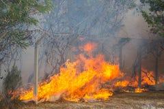 Fuego salvaje de Bush Imagen de archivo libre de regalías