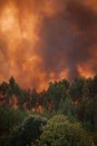 Fuego salvaje del bosque Fotografía de archivo libre de regalías