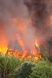 Fuego salvaje del bosque Imagen de archivo libre de regalías