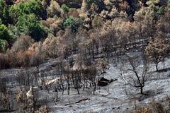 Fuego salvaje del bosque Foto de archivo libre de regalías