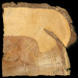 fuego salvaje del bosque registrado en anillos del pino Foto de archivo libre de regalías