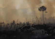 Fuego y bosque fotos de archivo