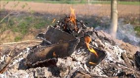 Fuego y humo en jardín almacen de metraje de vídeo