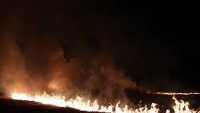 Fuego y humo Fuego en el campo almacen de video