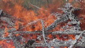 Fuego y humo grandes del fuego, primer, cacerola, panorama horizontal almacen de video