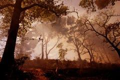 Fuego y niebla Imágenes de archivo libres de regalías