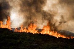 Fuego y tala de árboles Imagen de archivo libre de regalías