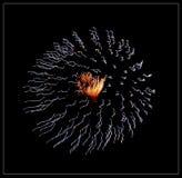 fuegos artificiales Imágenes de archivo libres de regalías