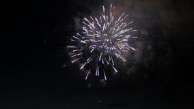 Fuegos artificiales coloridos en el cielo nocturno holiday almacen de metraje de vídeo