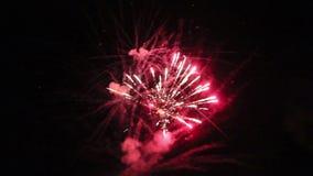 Fuegos artificiales de la noche en el cielo por un día de fiesta almacen de metraje de vídeo