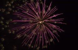 Fuegos artificiales púrpuras Fotos de archivo libres de regalías