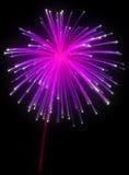 Fuegos artificiales púrpuras festivos en la noche Foto de archivo