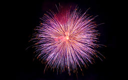 Fuegos artificiales púrpuras y de oro Imagen de archivo libre de regalías
