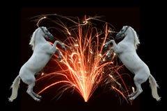 Fuegos artificiales y caballos Imágenes de archivo libres de regalías