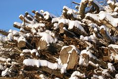 Fuelwood against Blue Sky in Winter. A large pile of fuelwood of deciduous trees like birch, covered with snow against the blue sky in winter. Photographed in Stock Photography
