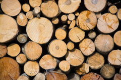 Fuelwood Stock Photography