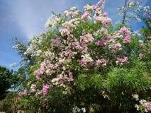 Fueng Fah Flower royalty free stock image