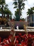 Fuente de agua con las palmeras y las plantas Imagen de archivo