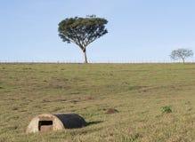 Fuente de agua en pasto de la granja Imagen de archivo libre de regalías