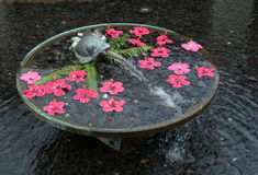 Fuente de agua redonda con los pescados y la flotación roja de las flores Fotos de archivo libres de regalías