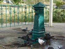 Fuente de la fuente de agua potable en Kiev y palomas Fotografía de archivo