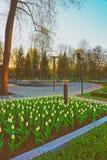 Fuente de las flores de los tulipanes en Central Park en Druskininkai foto de archivo