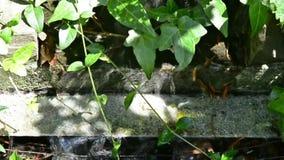 Fuente del jardín de la cascada del agua metrajes