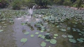 Fuente en el lago almacen de video
