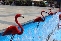 Fuente roja de los flamencos Foto de archivo libre de regalías