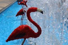 Fuente roja de los flamencos Fotos de archivo libres de regalías