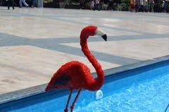 Fuente roja de los flamencos Imagen de archivo libre de regalías