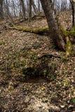 Fuente subterr?neo natural del agua de manatial en bosque salvaje foto de archivo libre de regalías