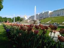 Fuentes de Peterhof Imágenes de archivo libres de regalías
