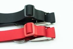 Fuentes del animal doméstico sobre los cuellos para el perro en el fondo blanco collares Imágenes de archivo libres de regalías
