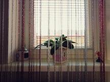 Fuera de la ventana del verano Imagen de archivo libre de regalías