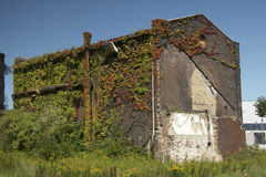 Fuerst Hardenberg Colliery 09 - overgrown vegatation Stock Photos